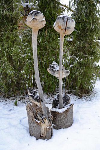 Trollblumen 97cm Buche natur